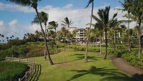 Imagen hermosa de las palmeras, rastros entre ellas y el montaje tropical kapalua del centro turístico el lugar preferido al rest almacen de metraje de vídeo