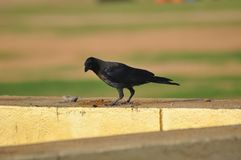 Imagen hermosa de los pájaros imagenes de archivo