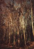 Imagen hermosa de maderas fotografía de archivo