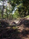 Imagen hermosa del bosque Foto de archivo libre de regalías