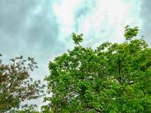 Imagen hermosa del cielo imagenes de archivo