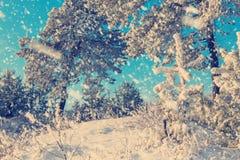 Imagen hermosa del invierno landscape Imagen de archivo libre de regalías