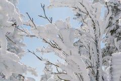 Imagen hermosa del invierno landscape Fotos de archivo libres de regalías