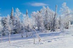 Imagen hermosa del invierno landscape Imagenes de archivo