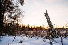 Imagen hermosa del invierno landscape Imágenes de archivo libres de regalías