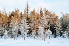 Imagen hermosa del invierno landscape Foto de archivo libre de regalías