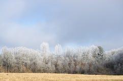 Imagen hermosa del invierno landscape Fotografía de archivo