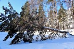 Imagen hermosa del invierno landscape Montañas y abedules siberia Khakassia Fotografía de archivo libre de regalías