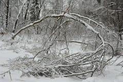 Imagen hermosa del invierno landscape Un árbol caido bloqueó el camino Foto de archivo libre de regalías