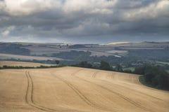 Imagen hermosa del paisaje del campo agrícola enorme de la cebada o Foto de archivo