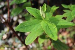 Imagen hermosa del retrato de las hojas micro de la planta Imagen de archivo