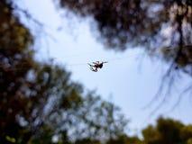 Imagen hermosa en la cual usted puede ver una ara?a el caminar a trav?s del centro de la imagen en un hilo horizontal que la llev fotos de archivo libres de regalías