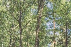 Imagen horizontal del follaje temprano de la primavera del borrachín - SP vibrante del verde Imagen de archivo