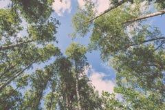 Imagen horizontal del follaje temprano de la primavera del borrachín - SP vibrante del verde Imagenes de archivo