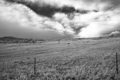 Imagen infrarroja de un campo del invierno fuera de Boulder, Colorado fotografía de archivo