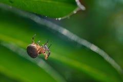 Imagen macra de la araña en jardín fotografía de archivo libre de regalías