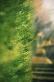 Imagen macra de las ramas de árbol en un fondo de la puesta del sol Fotografía de archivo libre de regalías
