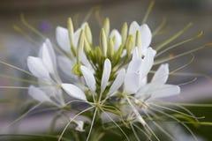 Imagen macra de una flor en un jardín Foto de archivo libre de regalías