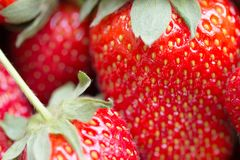 Imagen macra de una fresa madura jugosa imagen de archivo libre de regalías