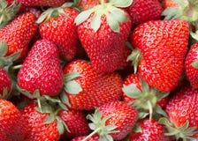 Imagen macra de una fresa madura jugosa Foto de archivo