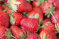 Imagen macra de una fresa madura jugosa imagenes de archivo