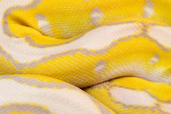 Imagen macra de una serpiente amarilla fotografía de archivo