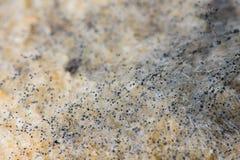 Imagen macra del molde en un pan Fotografía de archivo libre de regalías