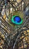 Imagen micro de una pluma del pavo real con colores atractivos foto de archivo