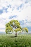 Imagen natural Imagen de archivo libre de regalías