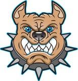 Imagen o insignia del pitbull Imagen de archivo libre de regalías