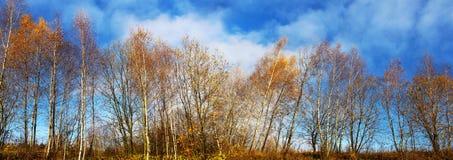 Imagen panorámica de árboles de hojas caducas en otoño en un fondo azul Foto de archivo