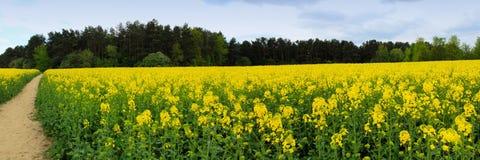 Imagen panorámica de campos amarillos florecientes Foto de archivo libre de regalías