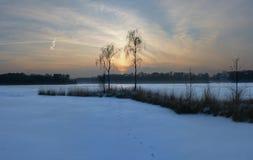 Imagen panorámica de la puesta del sol detrás de dos abedules al lado de una charca congelada en invierno Foto de archivo libre de regalías
