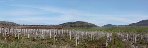 Imagen panorámica de montañas y del viñedo en abril. imagenes de archivo