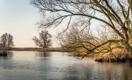 Imagen panorámica de un árbol desnudo con las ramas irregulares en el ed Imagenes de archivo