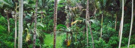 Imagen panorámica del bosque tropical en la isla de Oahu imagen de archivo libre de regalías