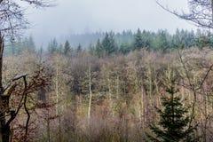 Imagen que muestra el contraste de árboles sin las hojas y de árboles de pino verdes en el bosque fotografía de archivo