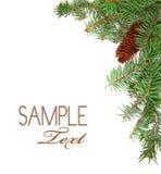 Imagen rústica de la Navidad de vástagos del árbol de pino y de un pi Imagenes de archivo
