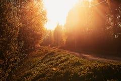 Imagen retra del camino en la puesta del sol foto de archivo libre de regalías