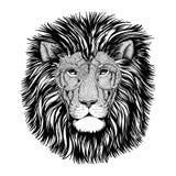 Imagen salvaje del león del inconformista para el tatuaje, logotipo, emblema, diseño de la insignia Imagenes de archivo