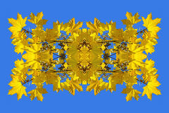 Imagen simétrica hecha de la foto de hojas de arce amarillas Fotografía de archivo