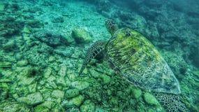 Imagen subacuática Foto de archivo libre de regalías