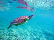 Imagen subacuática de la tortuga del mar para la plantilla de la bandera con el lugar del texto Fotos de archivo libres de regalías