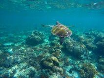 Imagen submarina de la tortuga de mar en el arrecife de coral para la plantilla de la bandera Imagenes de archivo