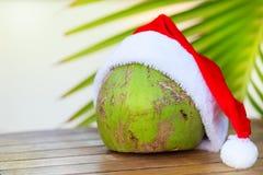 Imagen tropical del coco en hojas de palma rojas del sombrero de la Navidad Fotografía de archivo