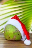 Imagen tropical del coco en hojas de palma rojas del sombrero de la Navidad Foto de archivo libre de regalías