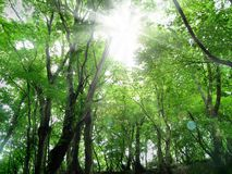 Imagen verde fresca Imágenes de archivo libres de regalías