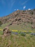 Imagen vertical de Rocky Cliff con los Wildflowers amarillos y púrpuras imagen de archivo libre de regalías