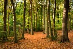 Imagen vibrante del paisaje del bosque de la caída del otoño Imagen de archivo libre de regalías