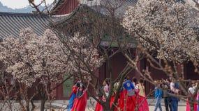Imagens bonitas da paisagem no palácio Seoul de Gyeongbok, Coreia do Sul imagem de stock